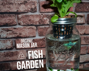 Mason Jar Fish Garden - Desktop Aquaponics and Sustainable Garden
