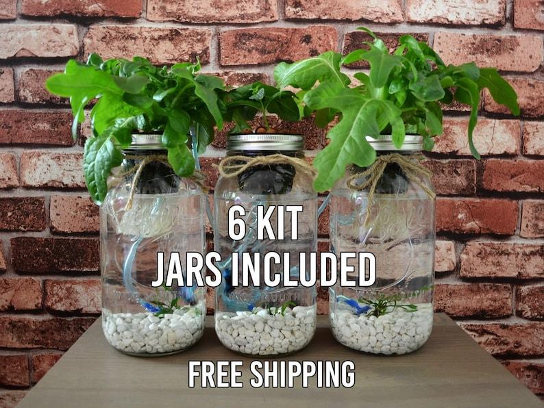 6 Mason Jar Aquaponics Kit Build Your Own Hydroponics Herb ...