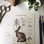 Natural Study European Hare Print 5x7""