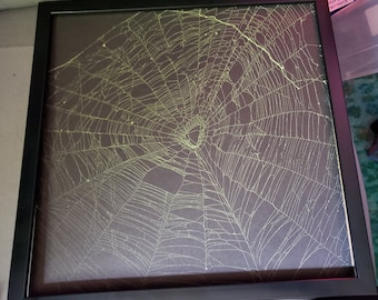 Large 12 x 12 inch Real Orb Weaver preserved spider web, Wall hanging, Web Art,