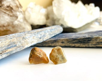 Coprolite Stud Earrings, Real Fossilized Dinosaur Poop from the Badlands of Alberta, Awesome Gift for Paleontology Buffs and Dinosaur Lovers