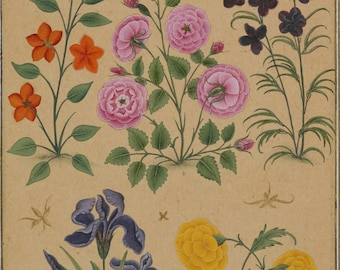 Mughal Flowers from the The Dara Shikoh Album 1631