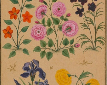 17th Century Flower Studies, paintings assembled by Dara Shikoh 1630-33