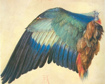 Wing of a Blue Roller by Albrecht Durer
