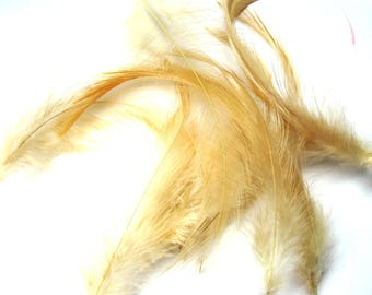 20 DUVETS COLLAR BEIGE ROOSTER FEATHERS GOLD 10/12 CM