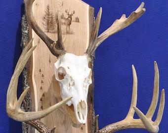 Deer Hunting Mount ~ Deer Mount Plaque ~ European Mount Plaque ~ Deer Skull Mount ~ Gift For Hunter ~ Antler Mount ~ Antler Plaque ~ Deer
