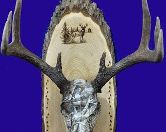 Hunting Gift ~ European Mount ~ Deer Hunting ~ Deer Skull Mount ~ Gift For Hunter ~ Antler Mount ~ Antler Plaque ~ Husband Gift ~ Deer Hunt