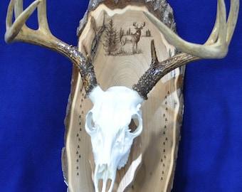 Rustic decor Deer KRENEK SKULL BRACKET Hunters Hogs 6- European Skull Mount Hanger Brackets and Man Cave Taxidermist Etc
