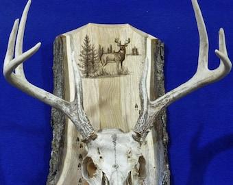 Deer Hunting ~ European Mount Plaque ~ Hunting ~ Deer Skull Mount ~ Gift For Hunter ~ Antler Mount ~Antler Plaque ~ Deer Hunting Gift ~ Deer