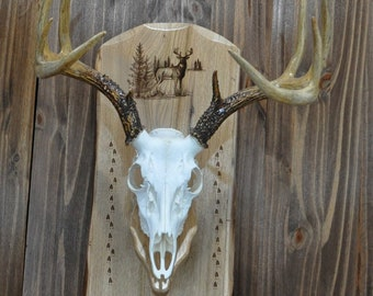 Deer Mount Boards ~ Deer Hunting ~ European Mount Plaque ~ Hunting ~ Deer Skull Mount ~ Gift For Hunter ~ Antler Mount ~ Deer Hunting Gift