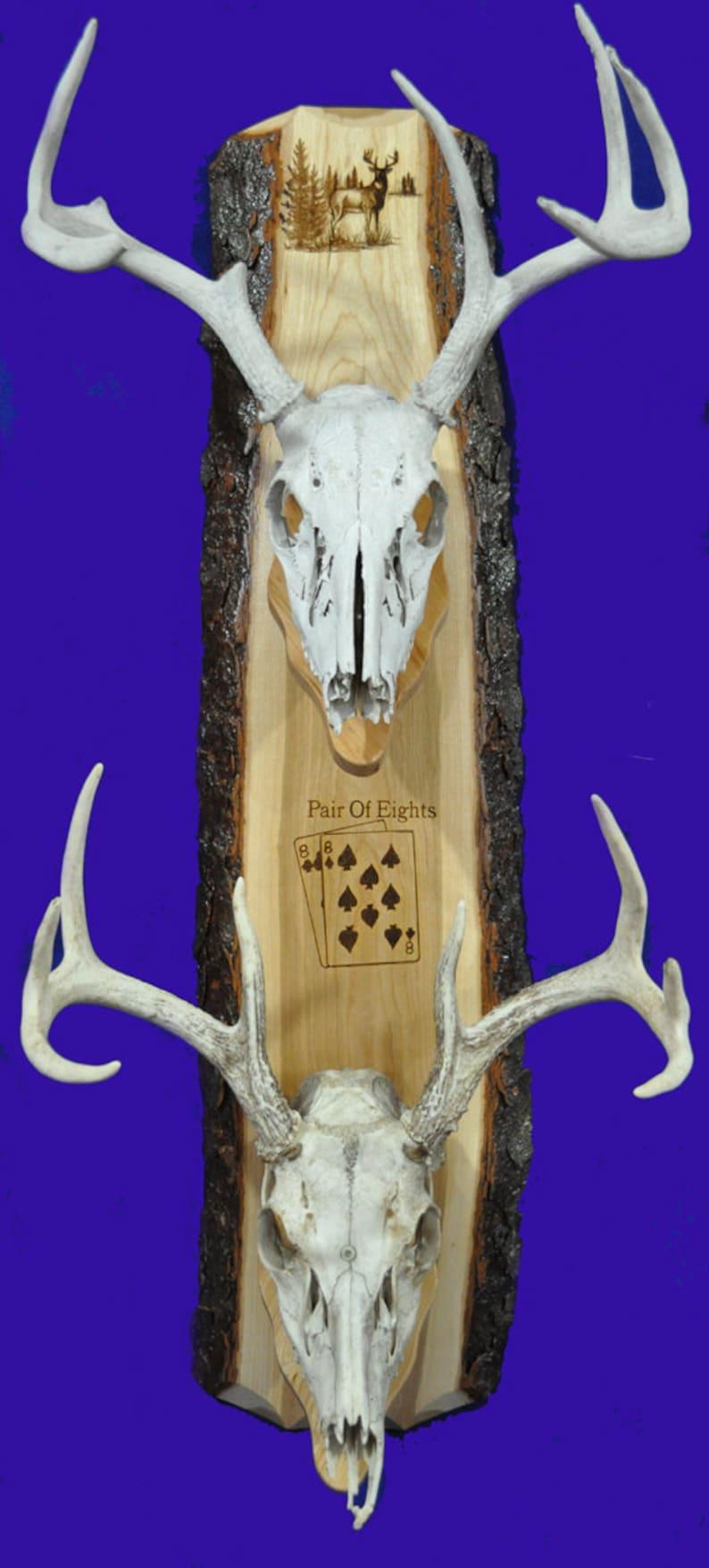 Deer Hunting  European Mount Plaque  Deer Skull Mount  Gift image 0