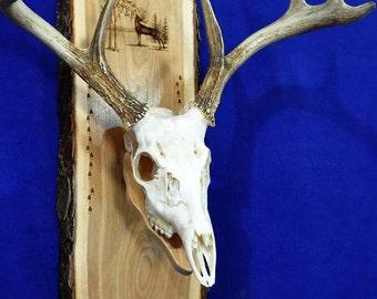Hunting. European Mount Plaque. Deer Hunting. Deer Skull Mount. Gift For Hunter. Antler Mount. Antler Plaque. Deer Hunting Gifts. Deer