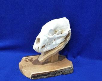 Bear Hunting | Hunting | Bear Mount Plaque | Bear Skull Mount Kit | Gift For Hunter | Gift For Bear Hunter | Hunting Gifts | Cabin Decor