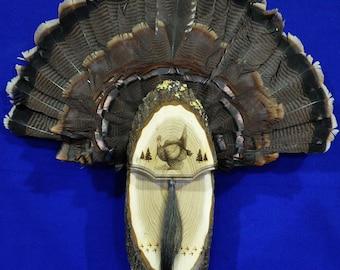 Turkey Hunting / Turkey Fan Mount / Turkey Fan Plaque / Turkey Hunting Gift / Turkey Fan Display / First Turkey / Hunting / Turkey Hunt /