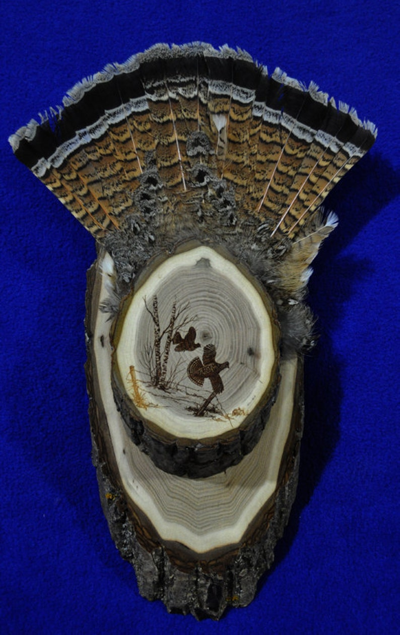 Hunting. Grouse Hunting. Grouse Fan Display. Grouse Fan Mount. image 1
