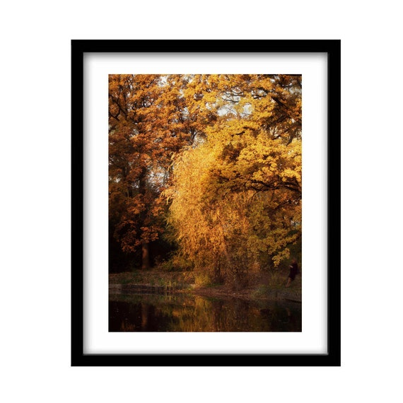 nature photography gift for her gift for women tree  b3430773c