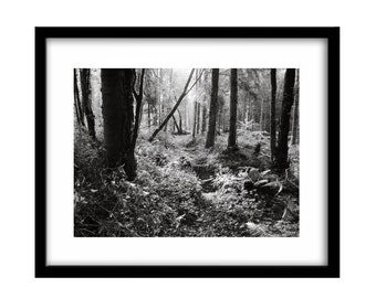 black and white photography, rain in the forest, black and white photography prints, outdoor wall décor, large outdoor wall art, nature art