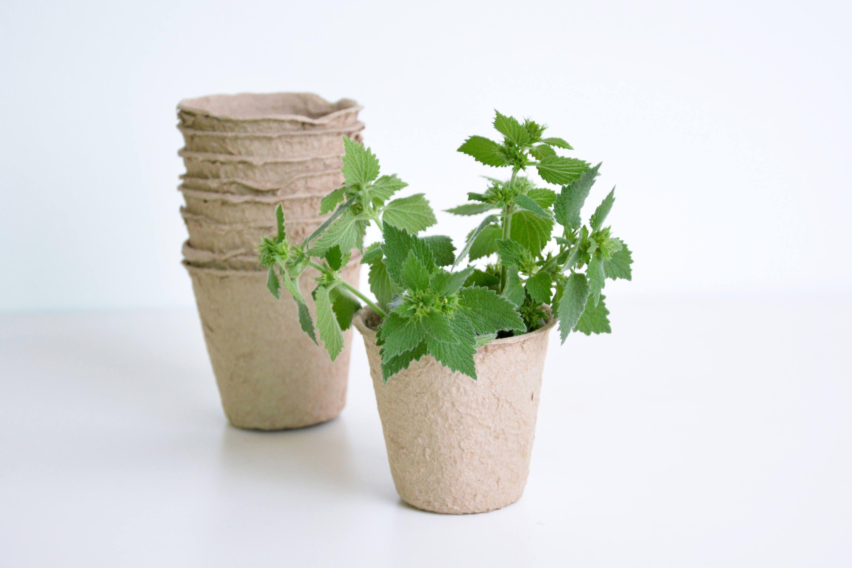 Set Of 6 Paper Mache Plant Pots Seed Starter Pots Etsy