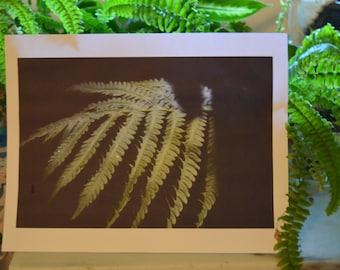 Color photograph of fern leaf with shadows