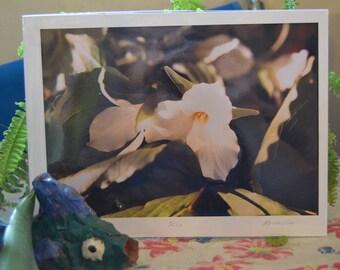 Original photograph of a Trillium