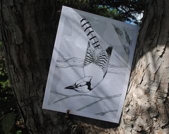 Quality Blue Jay upsidedown in a tree fine art print