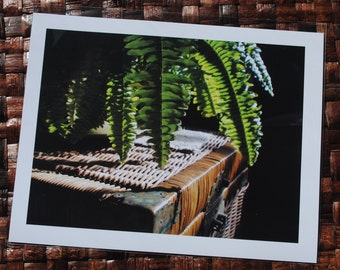 Quality Fern on Wicker Table Photograph