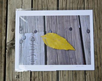 Color Photograph of a yellow leaf on weathered boards