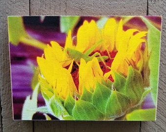 Grasshopper Original Photograph Printed on Canvas and Mounted. Free standing or hanging!