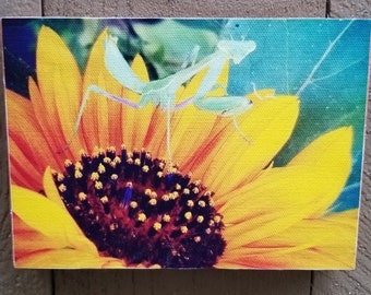 Mantis Original Photograph Printed on Canvas and Mounted. Free standing or hanging!