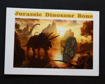 Dinosaur Bone Fossil *** Great Collector's Piece for Youth **** ETD001