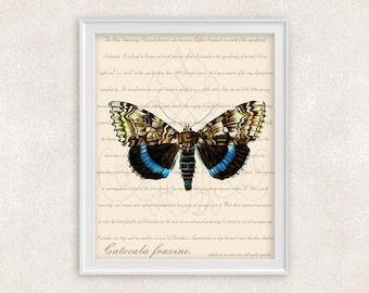Blue Moth Print - Underwing Moth - Vintage Wall Art - Home Decor - Office Art - 8x10 - Item #107