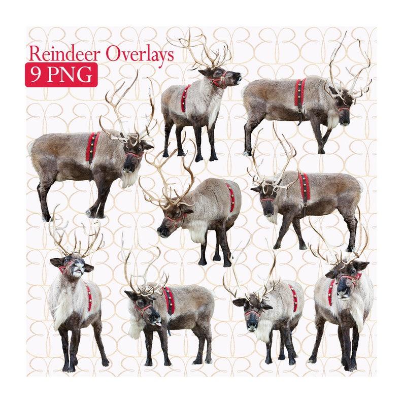 Digital Reinder Overlays 9  Bonus Christmas Tree Farm image 0