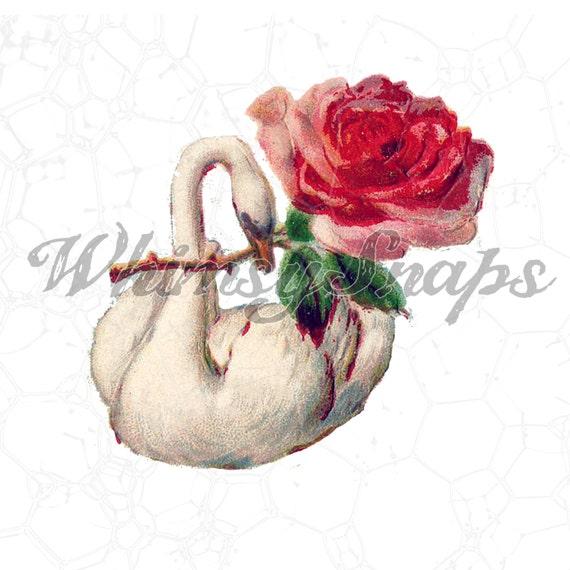Beautiful Swan With Pink Rose Vintage Illustration Digital Etsy