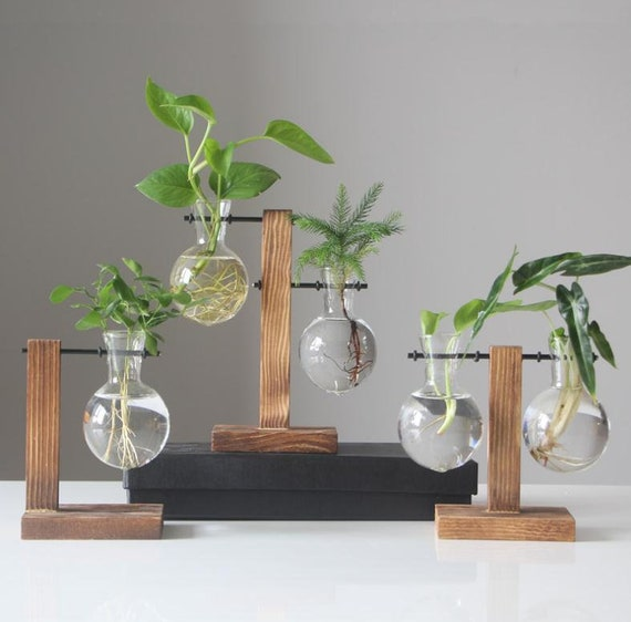 New Glass Terrarium Plant Pot With Wood Stand Glass Planter Etsy