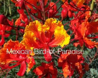 Birds of paradise | Etsy