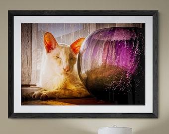 Sunworshippurr Feline Still Life Photographic and Fine Art Prints