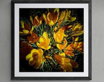 BOTANICS No. 11 Photographic and Fine Art Prints