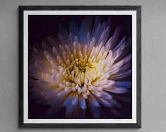 BOTANICS No. 10 Photographic and Fine Art Prints