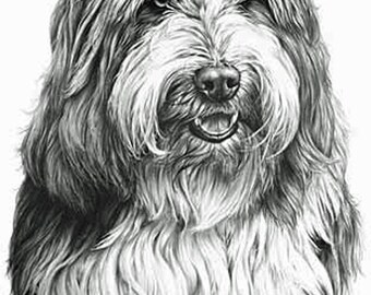 Bearded Collie, Fine Art Print by Mike Sibley