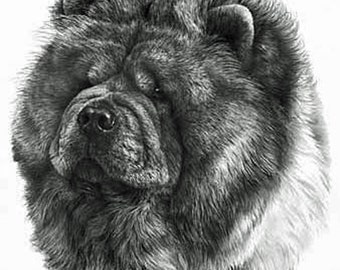 Chow Chow, Fine Art Print by Mike Sibley