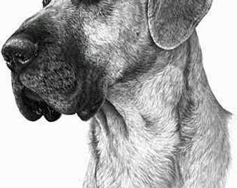 Great Dane , Fine Art Print by Mike Sibley