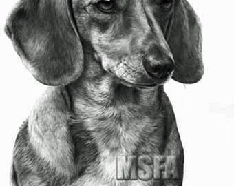 Dachshund (Smooth) , Fine Art Print by Mike Sibley