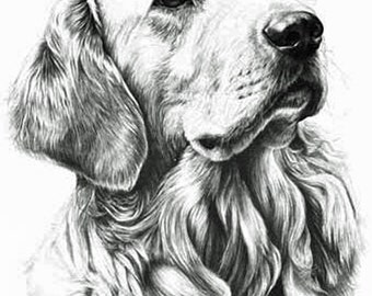 Golden Retriever , Fine Art Print by Mike Sibley
