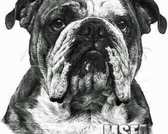 Bulldog, Fine Art Print by Mike Sibley