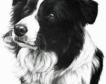 Border Collie, Fine Art Print by Mike Sibley