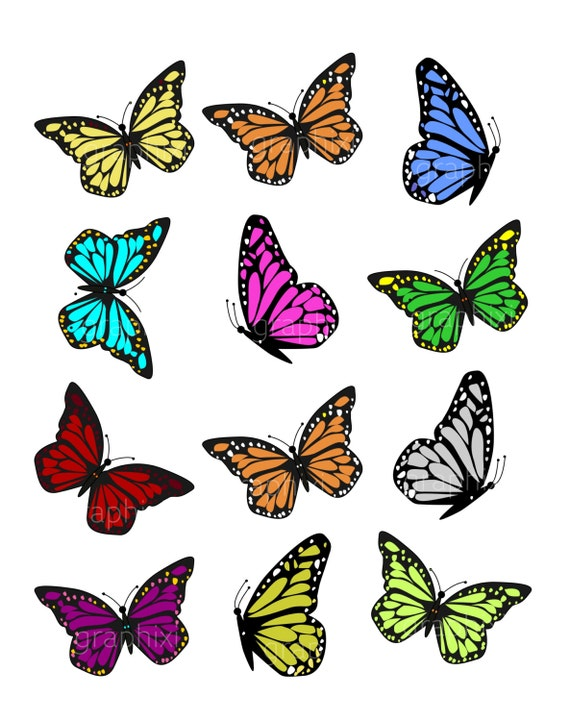 Clipart Butterflies Colorful Butterfly Clipart Commercial Use Vector Graphics Clipart Digital Clipart Svg Svg Files Butterflies Svg By Graphixi Net Catch My Party