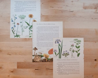 Vintage Botany Prints