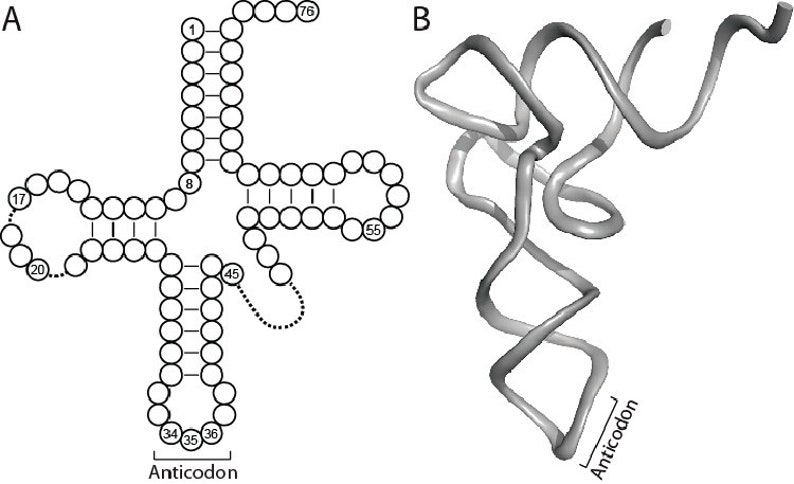 Geek Jewelry DNA Replication tRNA Silver Biology Earrings Silver RNA Earrings Sterling Silver Biology Gifts RNA Jewelry