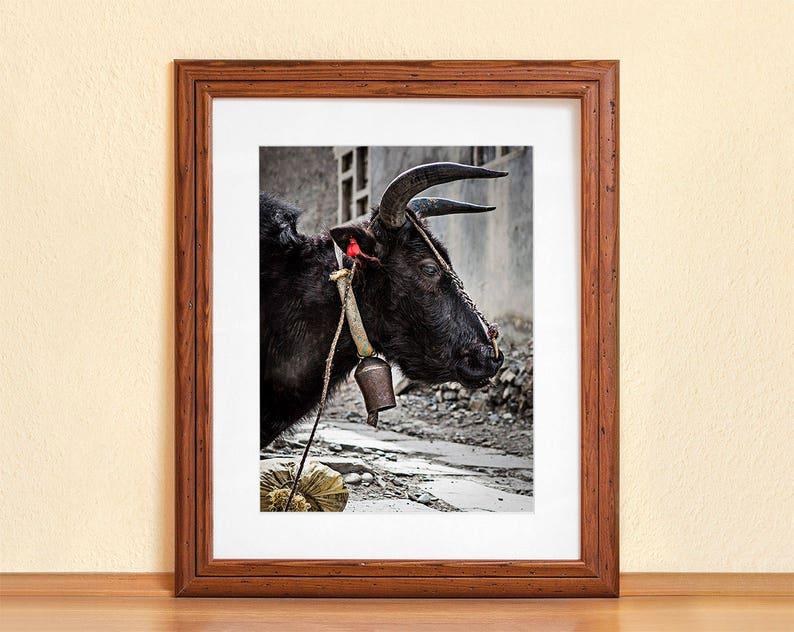 YAK // Photography Fine Art Print Himalaya Mustang Region image 0