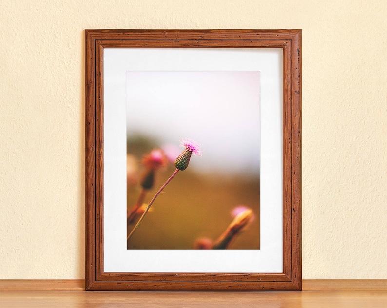WILD FLOWER // Photography Fine Art Print Summer Evening image 0